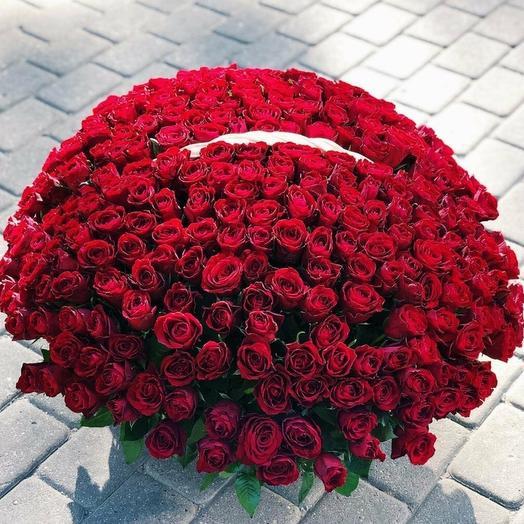 301 роза Краснодар
